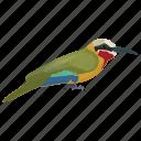 bird, colorful bird, cuban tody, todus multicolor, zoo icon