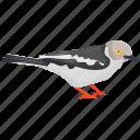 bird, coal tit, eurasia bird, passerine bird, songbird icon