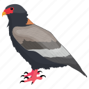bird, desert bird, falco, falcon, prey bird icon