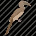 anorrhinus austeni, austen's hornbill, bird, brown hornbill, wild bird icon