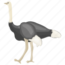 bird, common ostrich, domesticated bird, flightless bird, ostrich icon
