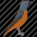 american robin, bird, european robin, robin, songbird icon