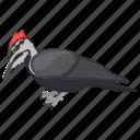 bird, forestry bird, near-passerine bird, picidae, woodpeckers icon