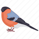 bird, erithacus rubecula, european robin, robin, robin redbreast