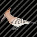 african bird, bird, colorful bird, eurasian hoopoe, hoopoe icon