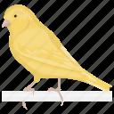 australian plainhead, bird, canary, domestic canary, songbird icon