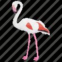 bird, crane bird, gruidae, long-legged bird, long-necked bird icon
