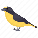 bird, reinita tropical, setophaga pitiayumi, tropical parula, yellow passerine icon