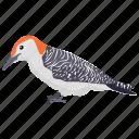 forestry bird, near-passerine bird, picidae, red-bellied bird, woodpeckers icon