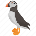 tufted puffin, puffin, pelagic seabird, bird, atlantic puffin