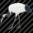 bird, ciconiidae, large waterbird, long-legged bird, long-necked bird, stork icon