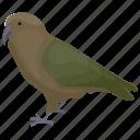 animal, aquila chrysaetos, bird, eagle, golden eagle