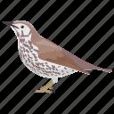 bird, hylocichla mustelina, passerine bird, songbird, wood thrush icon