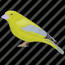 bird, pet bird, small bird, songbird, vermivora celata icon