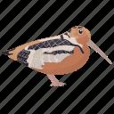 bird, curlew, eurasian curlew, numenius, wading bird icon