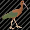 animal, bird, glossy ibis, large bird, plegadis falcinellus icon