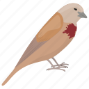 bird, bleeding-heart bird, bleeding-heart pigeon, dove, mindanao bleeding-heart icon