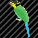 bird, broadbill, long-tailed bird, nepal bird, psarisomus dalhousiae icon