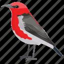animal, bird, red-breasted sapsucker, sphyrapicus ruber, woodpecker icon