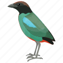 bird, colorful bird, fairy pitta, passerine bird, pitta nympha icon