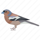 bird, chaffinch, common chaffinch, fringilla coelebs, male chaffinch icon