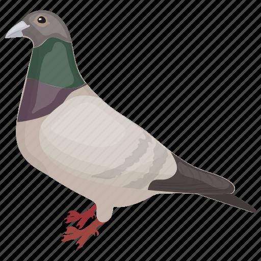 bird, columbidae, dove, peace bird, pigeon icon