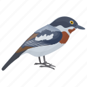 bird, chaffinch, common chaffinch, fringilla, fringilla coelebs icon