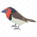 bird, colorful bird, european robin, robin, songbird icon
