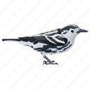 bird, black-and-white warbler, mniotilta varia, songbird, warbler mniotilta icon