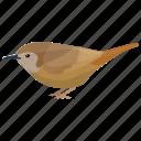 bird, common nightingale, luscinia megarhynchos, nightingale, songbird icon