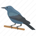 bird, blaumerle, blue thrush, male solitarius, monticola solitarius icon