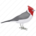 bird, cardinal bird, paroaria coronata, red-crested bird, songbird icon