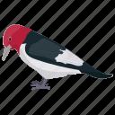 bird, melanerpes erythrocephalus, red-headed bird, woodpecker icon