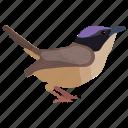 bird, female wheater, northern wheatear, oenanthe oenanthe, passerine bird icon