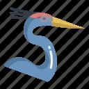 great, blue, heron