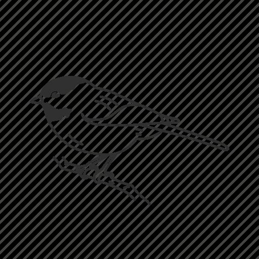 bird, chickadee, common bird icon