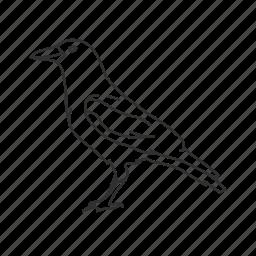 bird, black bird, clever, common bird, crow icon