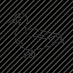 bird, common bird, duck icon