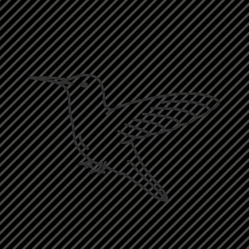 bird, fast bird, hummingbird, nector icon