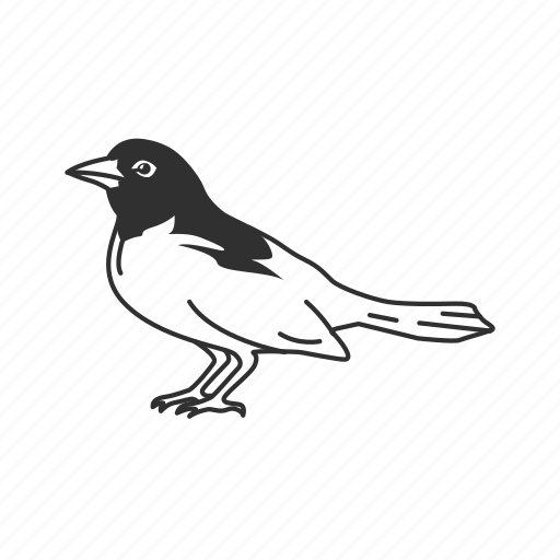 bird, oriole icon