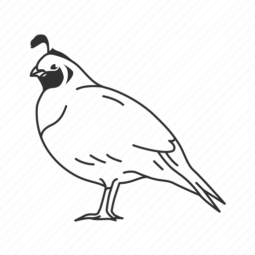 bird, quail icon