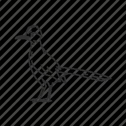 bird, desert bird, roadrunner icon