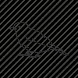 bird, common bird, robin icon