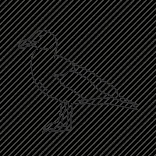 Beach bird, bird, common bird, seagull icon - Download on Iconfinder