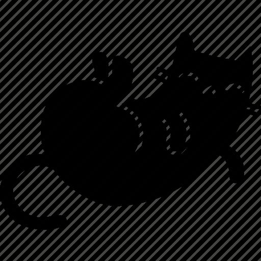 cat, feline, pet, sleep icon