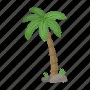 beach, palm, plant, tree, tropical icon