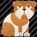 bulldog, canine, dog, pedigree, pet icon