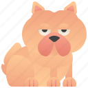 chinese, chowchow, dog, domestic, furry icon