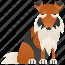 collie, domestic, friend, mammal, pet icon