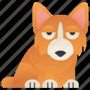 corgi, cute, dog, funny, small icon